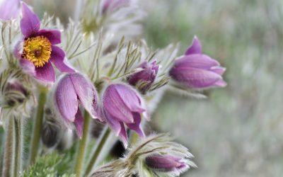 flower-3283322_1920_k