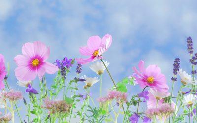 wild-flowers-571940_02